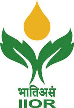 ICAR - Indian Institute of Oilseeds Research logo